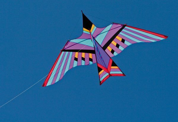 Into The Wind - George Peters' Cloud Bird Maui Einleiner-Drachen (1-Leiner), 294 cm x 170 cm, lila/bunt