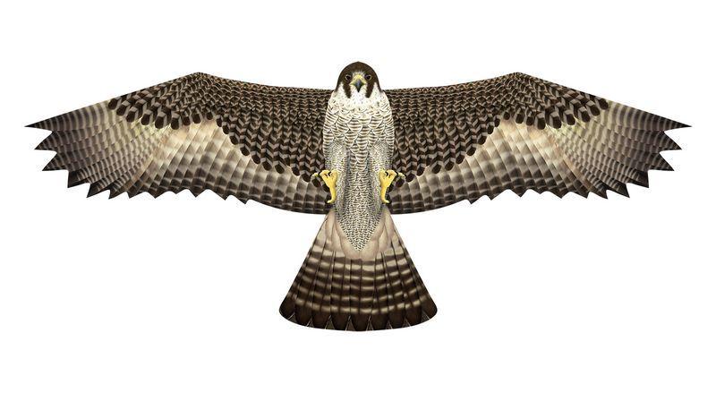 drachen kites kaufen